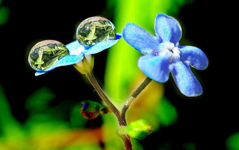 Капли дождя на цветах