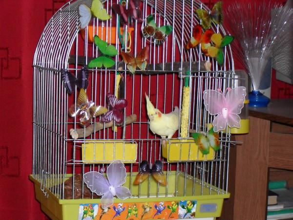 Как сделать чтобы от попугаев было меньше мусора