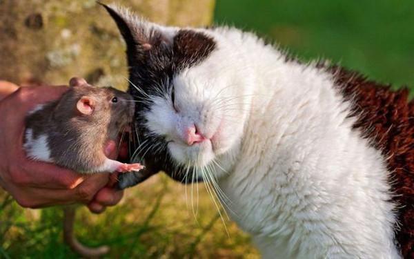 ответы на задачу кошки мышки