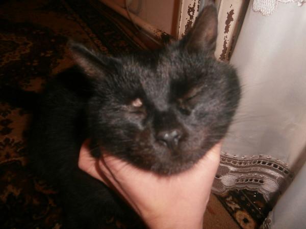 Ответы@mail ru у кошки лишай фото