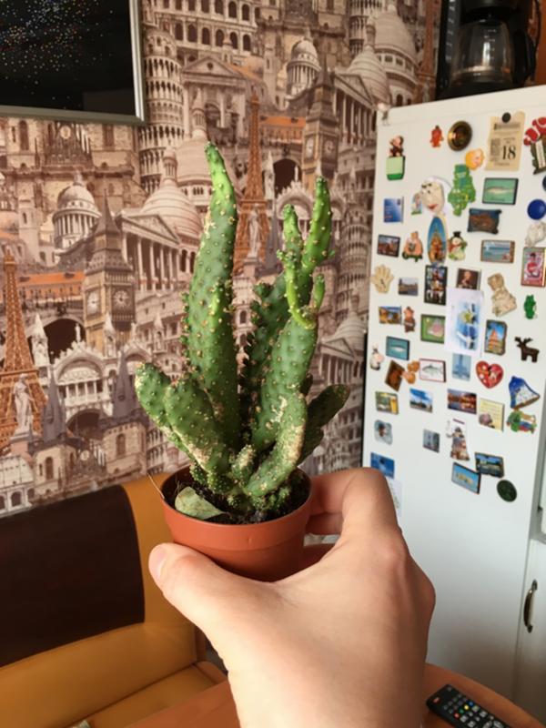 10 пунктов ухода за кактусами для детей