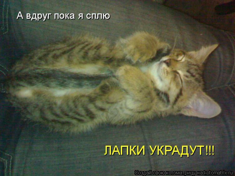 СТРАНСТВОВАЛ Где увидел кота вот сне к чему это такого случая предлагаем