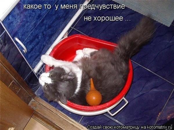 Запор у кота как сделать клизму 711