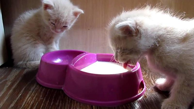 котенок и молоко фото