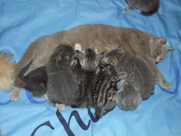 Содержание кошек, правила ухода и содержания кошки в