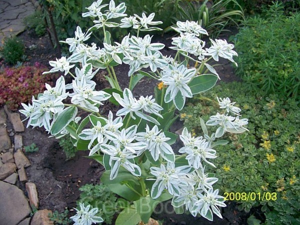 Вологодское кружево цветок фото