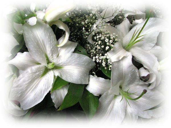 Открытки цветы для любимой лилии 72