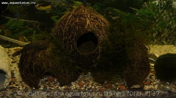 Поделки из кокосов для аквариума