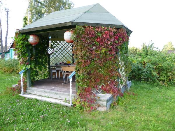 Пергола для винограда на даче своими руками фото