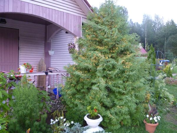 Высокое и низкое дерево картинки