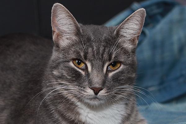 У котенка пелена на глазах что делать