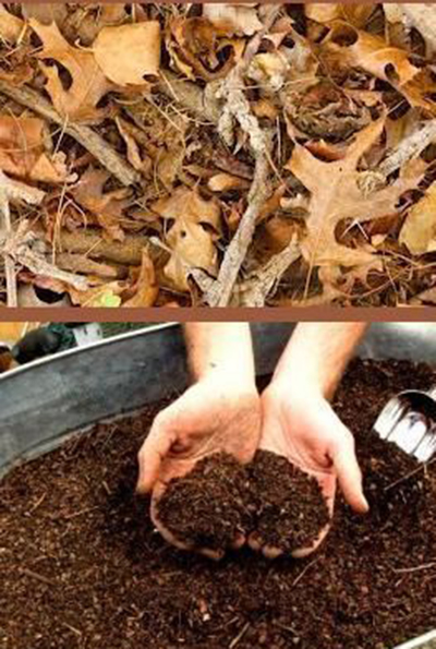 экологический проект: внедрение листьев как удобрение