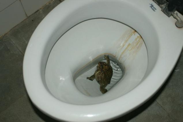 Почему когда ходишь в туалет по большому выходит слизь