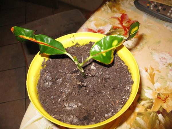 Опадают листья у цветов домашних условиях