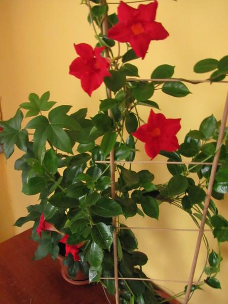 Balcony-flowers-ideas4-1