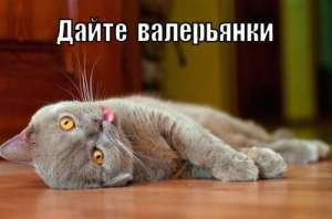 Почему коты так реагируют на валерьянку