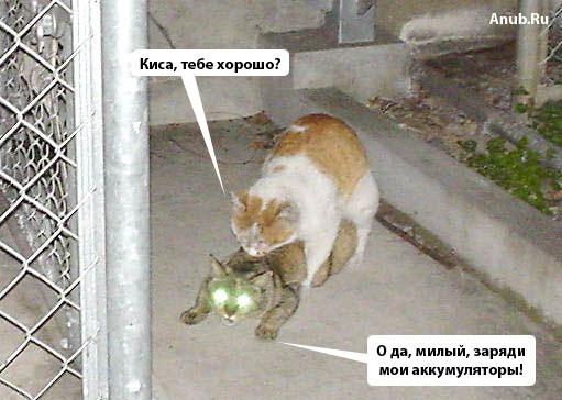 Видео секс кошек фото 604-121