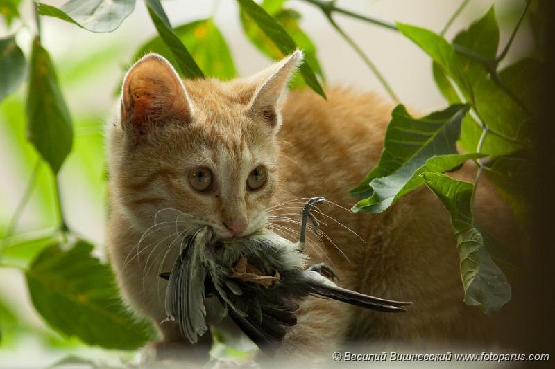 Рано пташечка запела как бы не съела