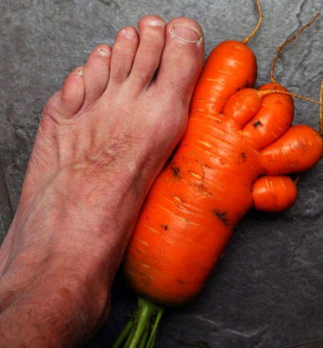 в попе морковка фото № 48485 без смс