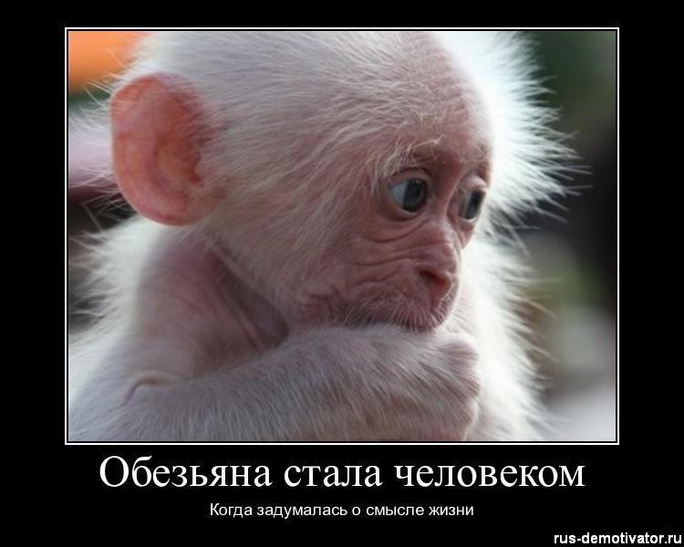Обезьяна Анекдот