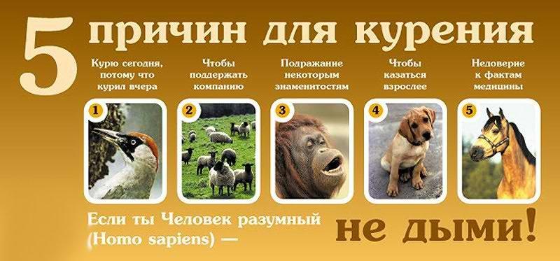 Плакат о вреде курения