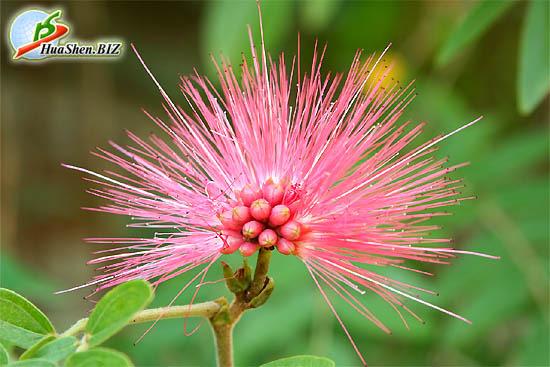 редкие растения цветы картинки