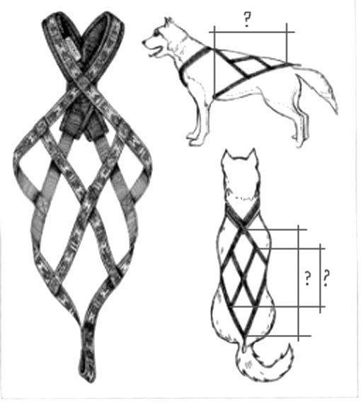 Шлейка для собаки своими руками сшить ездовую