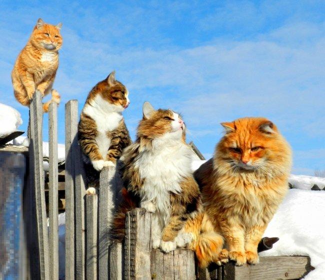 Кот на забор