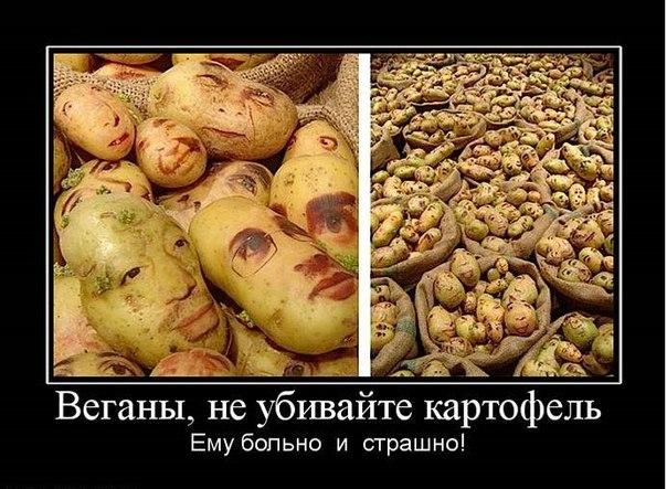 Отношения вегетарианцев к не вегетарианцам