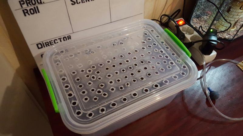 Как сделать контейнер для улитки