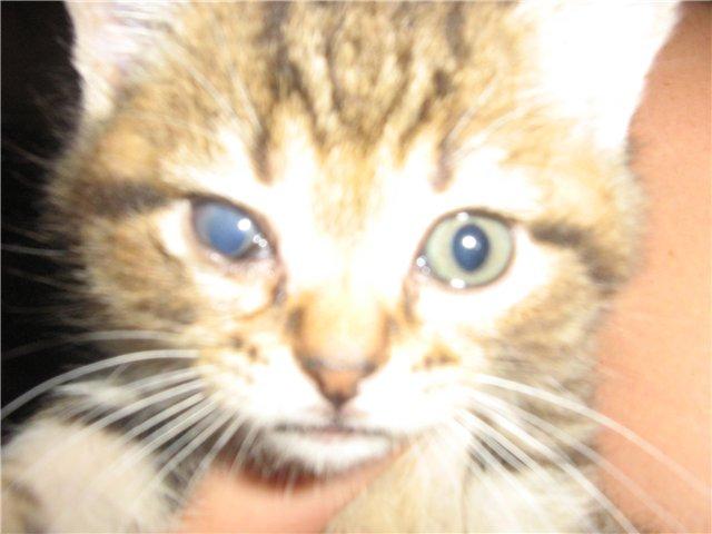 У котенка не открываются глаза когда бить тревогу