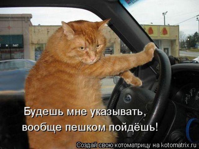 http://otvet.imgsmail.ru/download/196749191_57fba15a793a867409e9207823efab61_800.jpg