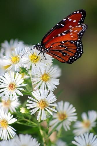 4 1 слово бабочка на цветке