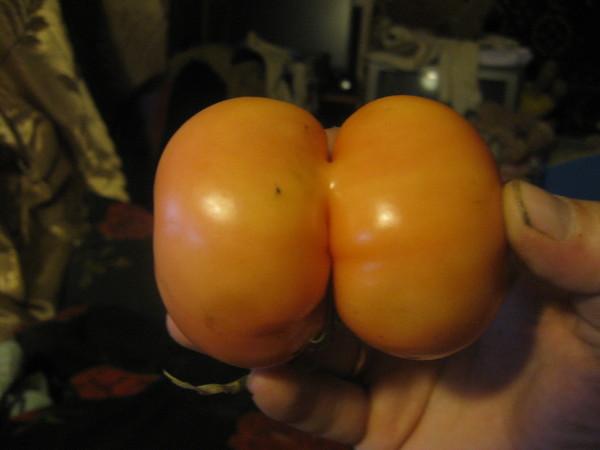 v-zhopu-po-samie-pomidori