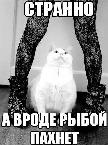 porno-kolgotki-razdevaetsya