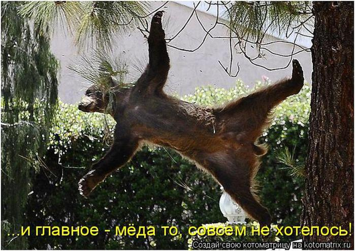 Год плешивого козла, главный месседж Москвы, многоходовочка . Свежие ФОТОжабы от Цензор.НЕТ - Цензор.НЕТ 6117