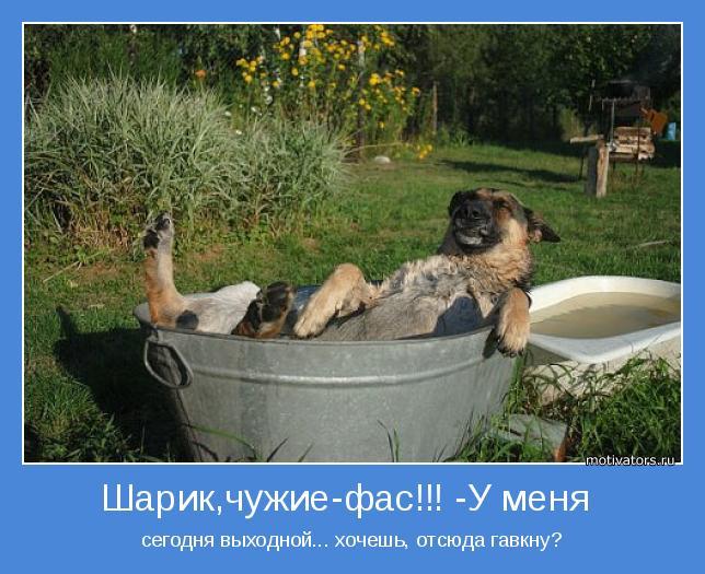 http://otvet.imgsmail.ru/download/20378447_a436ecfd38d4a945e7e3a3743424bb95_800.jpg