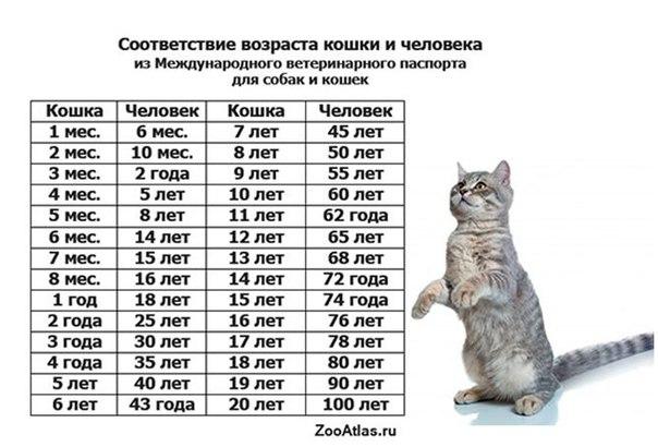 Сколько раз в году вязать кошку