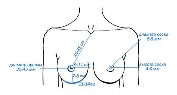 Как выглядит идеальная грудь на