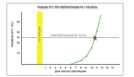 Сколько дней от овуляции до имплантации - Интересные статьи и факты! Axonopal.ru