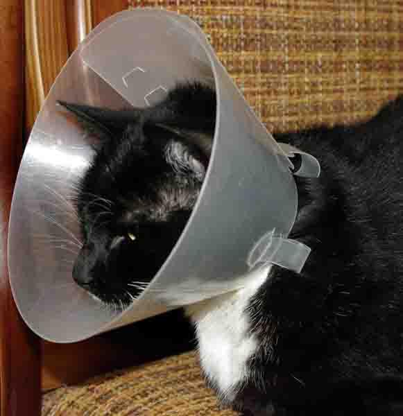 Воротник медицинский для кошки своими руками