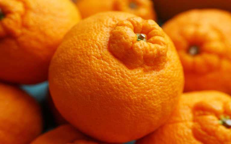 Апельсин Orange  № 2933089 без смс