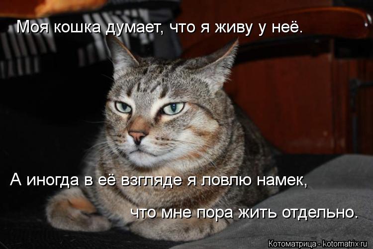 Скажу что кот подарил
