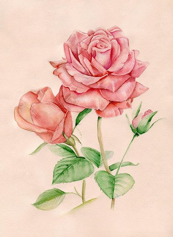 Рисунки цветы розы