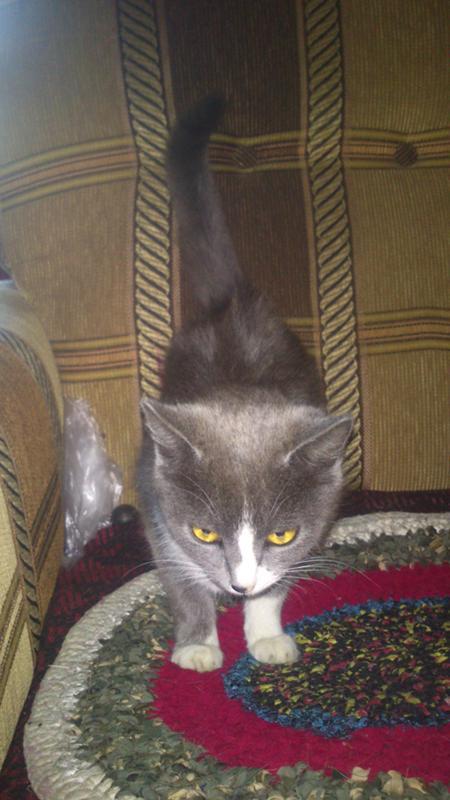 Отравление у кота лечение в домашних условиях
