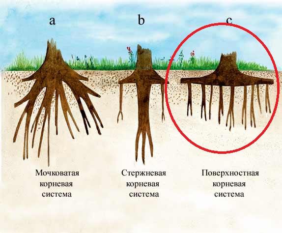 Крапива двудомная крапива двудомная 1 название растения 2 тип корневой системы 3 тип жилкования