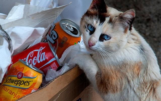 Самый редкий окрас у кошек