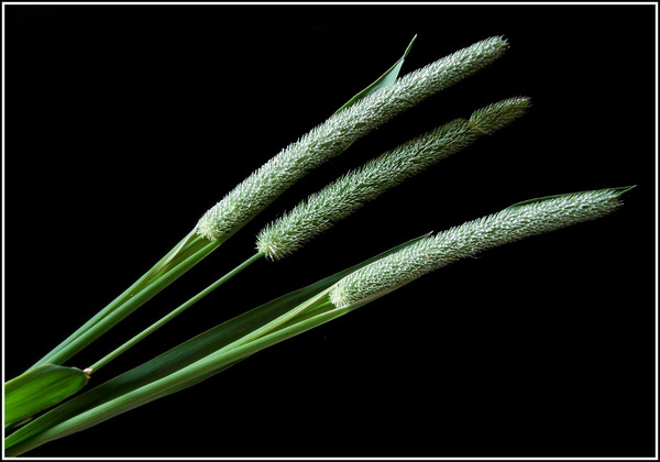 какая трава выводит паразитов из организма человека