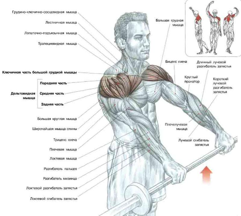 Мышцы плеч в домашних условиях