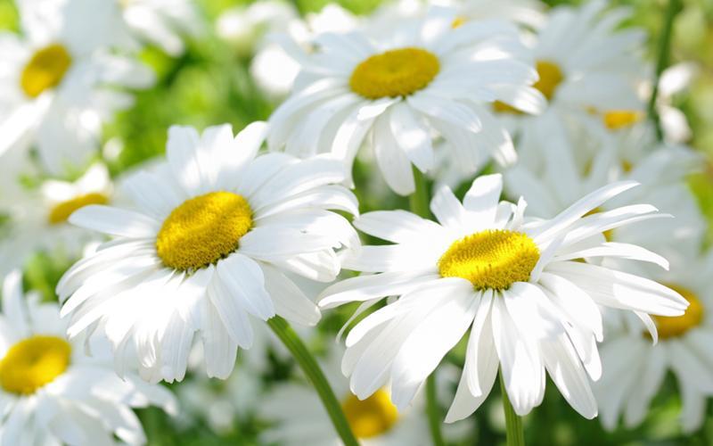 цветы фото красивые картинки на рабочий стол № 376881 бесплатно